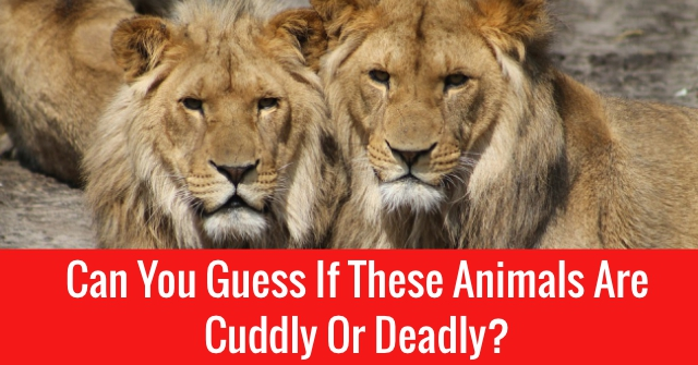 Can You Guess If These Animals Are Cuddly Or Deadly?