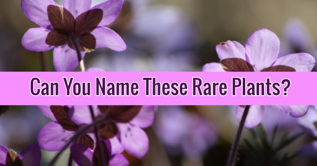 Can You Name These Rare Plants?