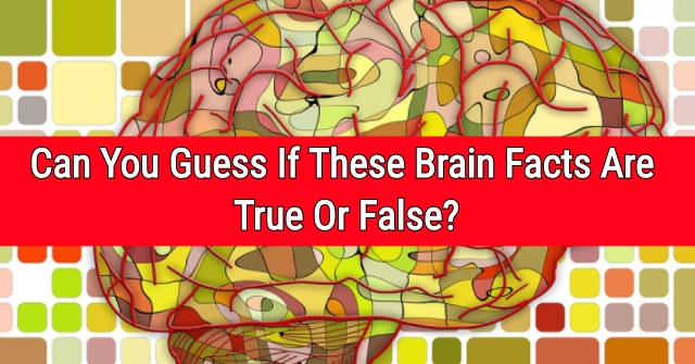 Can You Guess If These Brain Facts Are True Or False?
