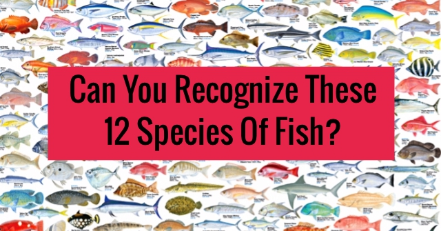 Can You Recognize These 12 Species Of Fish?