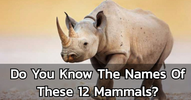 Do You Know The Names Of These 12 Mammals?