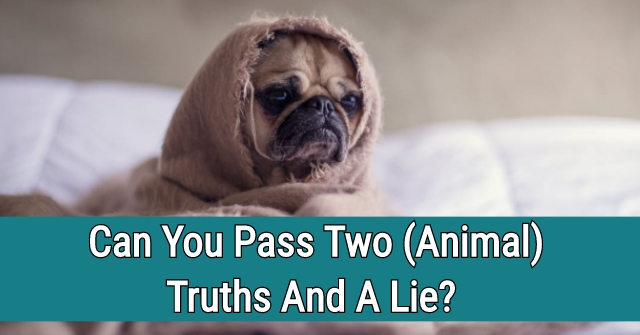 Can You Pass Two Animal Truths And A Lie?