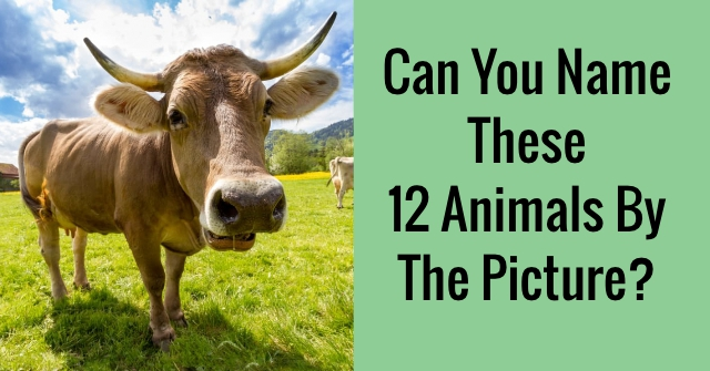 Can You Name These 12 Animals By The Picture?