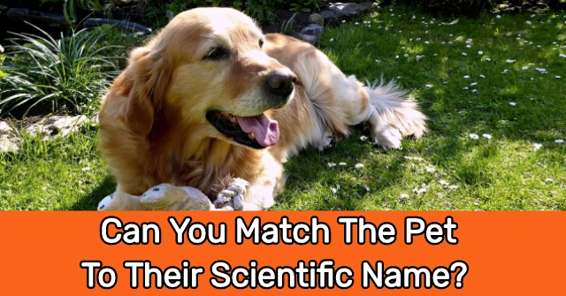 Can You Match The Pet To Their Scientific Name?