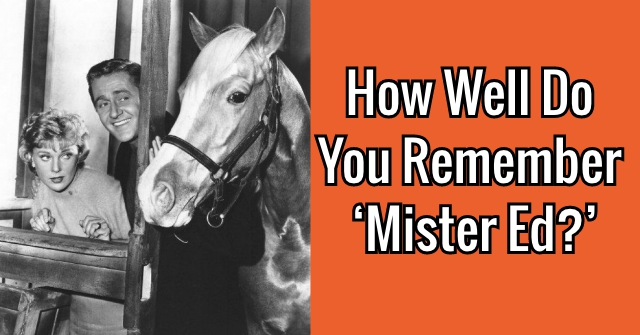 How Well Do You Remember 'Mister Ed?'