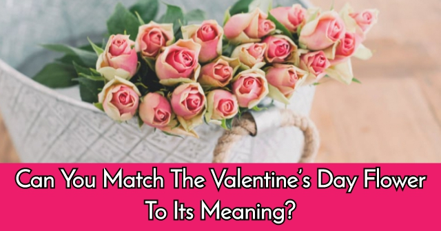 Can You Match The Valentine's Day Flower To Its Meaning?