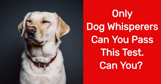 Only Dog Whisperers Can You Pass This Test. Can You?