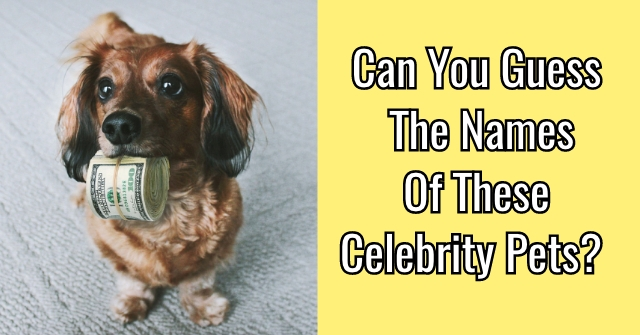 Can You Guess The Names Of These Celebrity Pets?