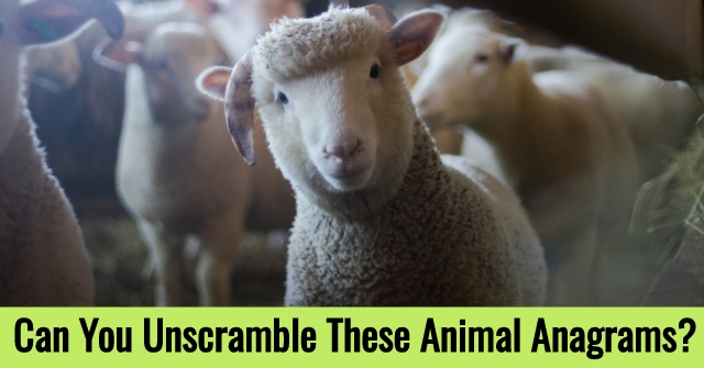 Can You Unscramble These Animal Anagrams?
