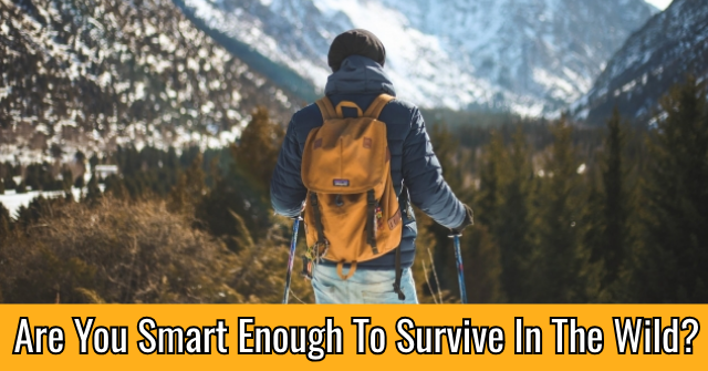 Are You Smart Enough To Survive In The Wild?