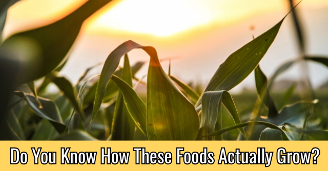 Do You Know How These Foods Actually Grow?