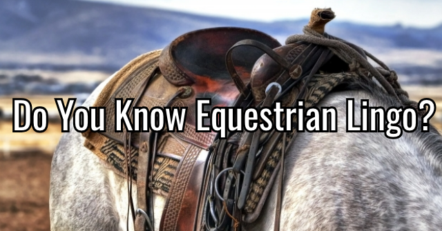 Do You Know Equestrian Lingo?