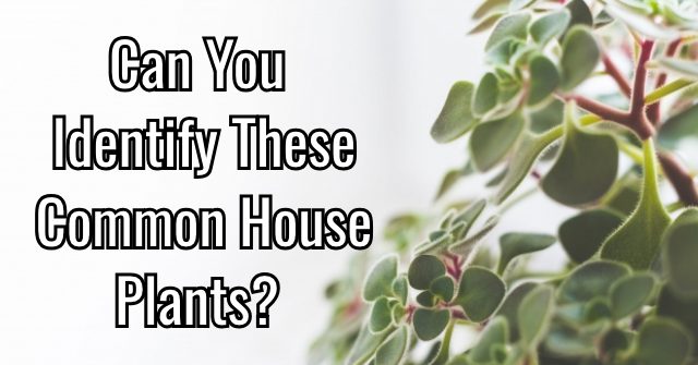 Can You Identify These Common House Plants?