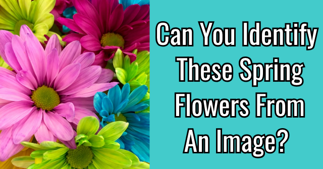 Can You Identify These Spring Flowers From An Image?