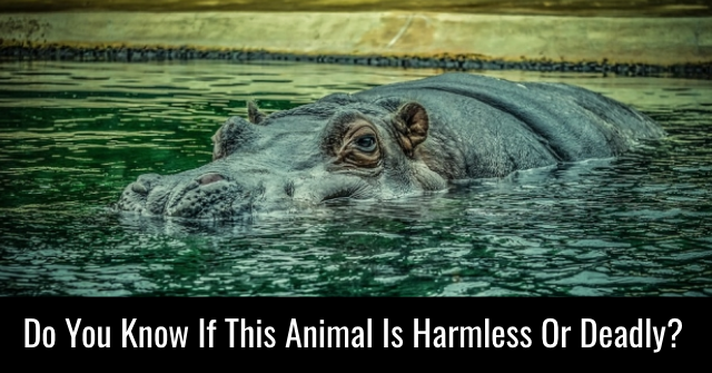 Do You Know If This Animal Is Harmless Or Deadly?